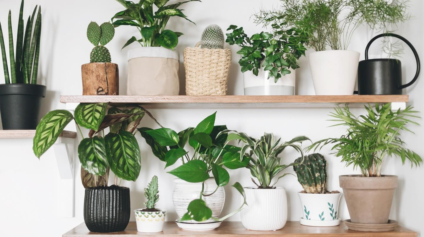 Why Choose Royal Sydney Removals to move your plants